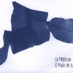 erbariocyano05