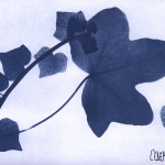 erbariocyano09