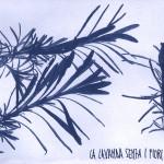 erbariocyano12