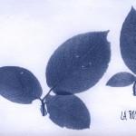 erbariocyano13