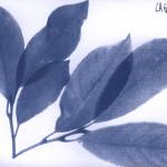 erbariocyano16